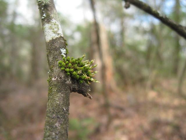 Tiny Moss Garden