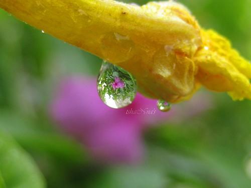 inside beauty..