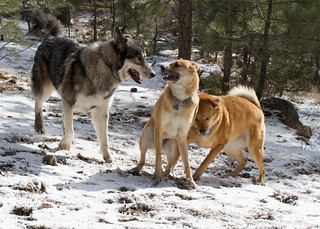 Bear, Dozer & Cloud 1 | by tehgipster