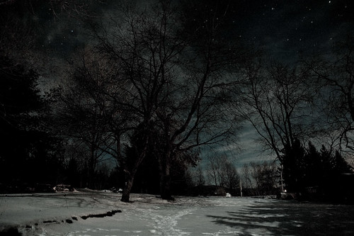 trees winter snow cold stars quiet shadows midnight moonlight wispy porchview coldtone thepottingshed
