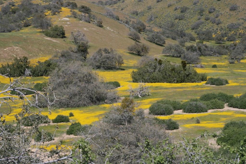 Field of Goldfields