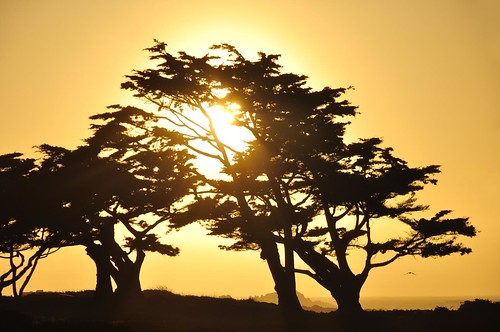 trees sunset sky sun set monterey gull explore pacificocean setting cypresstrees johnk pacificsunset explored d5000 johnkrzesinski randomok