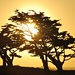Sunset through the trees at Pacific Grove by Images by John 'K'