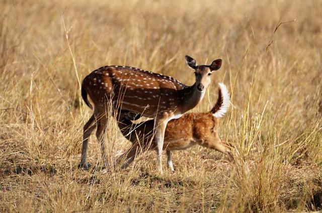 Bandhavgarh Tiger Reserve | List of Nation Park in India