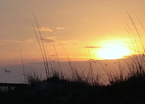beach birds sunrise dawn hiltonhead