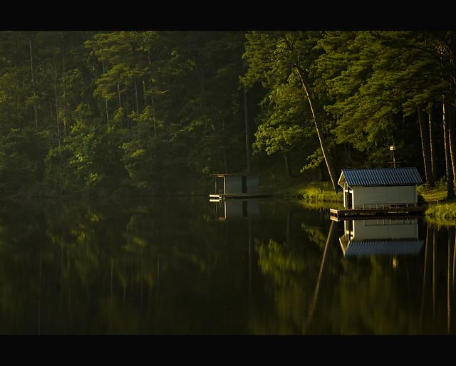 Moonlight in Talledega Forest