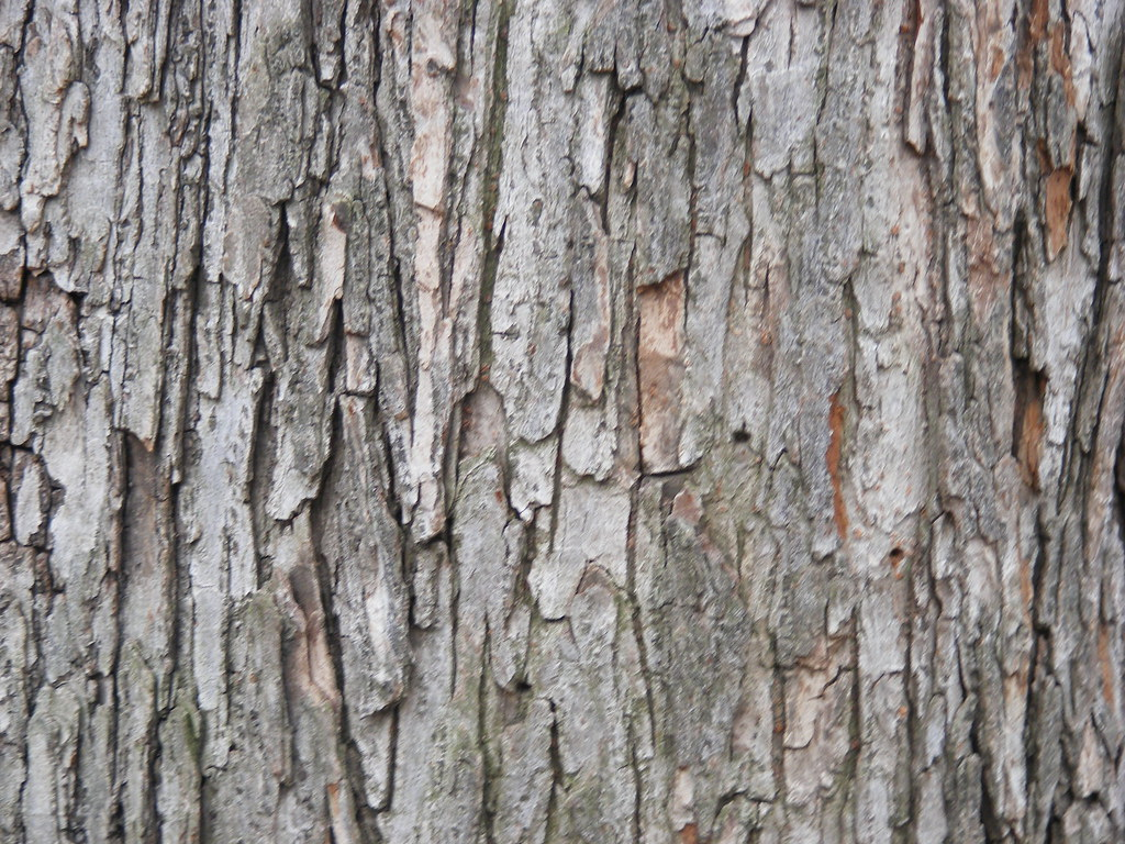 Tree Wood Texture 2 This Work Has Been Released By