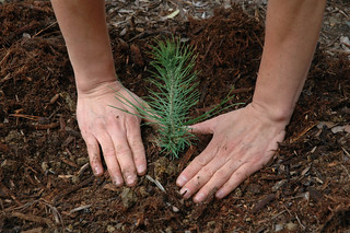 Seedling Planting | by Forest Service, USDA