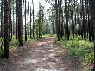 Path Weymouth Woods NC SP 0177