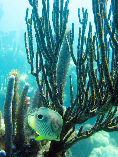 Under $300 Canon camera - morning light - snorkeling shallow reef.