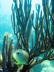 Under $300 Canon camera - morning light - snorkeling shallow reef.