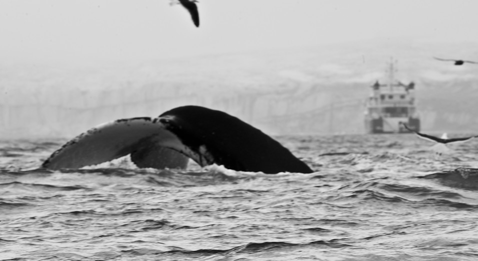 The Tail of a Boat & Whale
