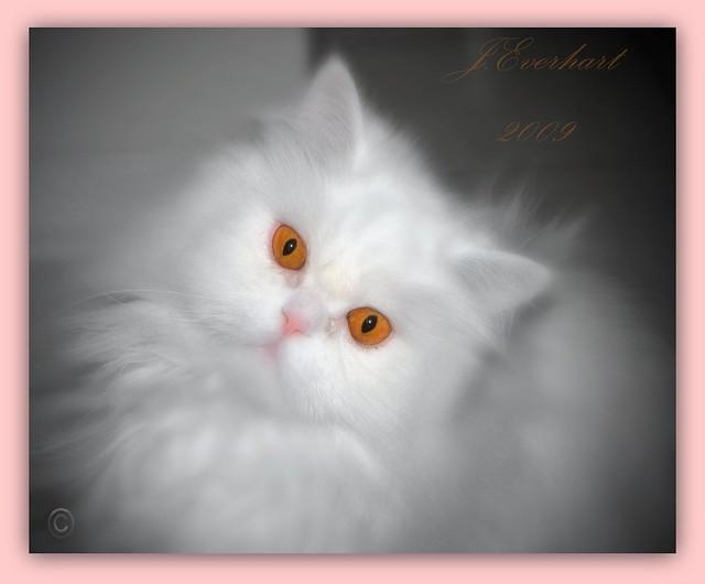 Cute Lil' Kitty Cat