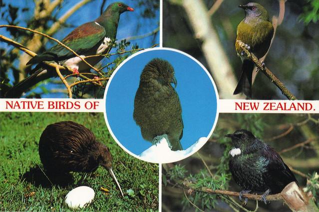 New Zealand Birds Postcard
