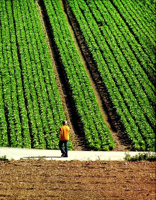 """""""...μακρινός, πηγαίνουν οι κηπουροί από την πορεία...""""  # EXPLORE (**i.) s3 P cr1,2"""