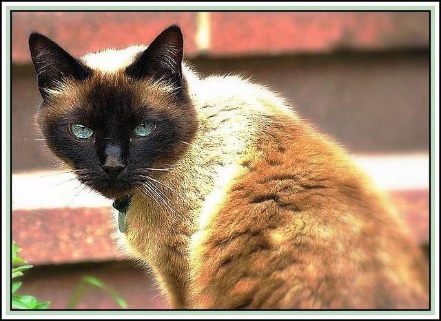 A tomcat