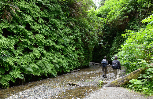 Entering the Fern Canyon | by www.halkaphoto.com