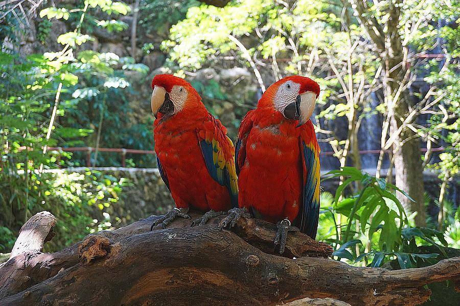 Xcaret Birds