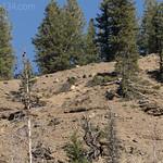 Petrified Trees along Specimen Creek