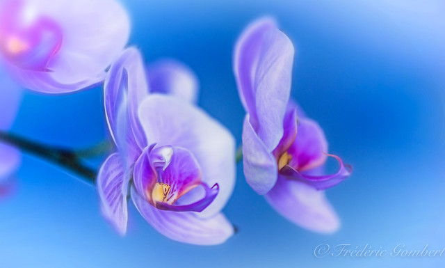 Spring purple desire , and light