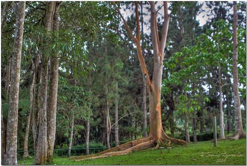 park trees mountain nature playground forest philippines resort eden pk hdr davao davaocity davaodelsur pinoykodakero garbongbisaya