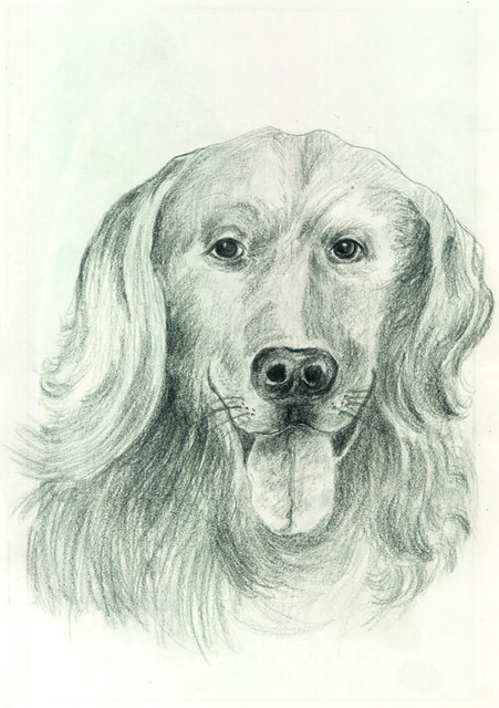 Pencil Shading Smart Dog These R Some Portraits Drawn By M Flickr