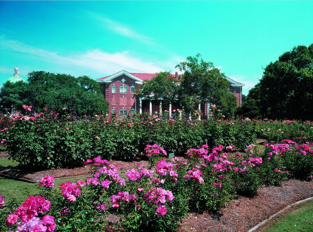 Mississippi Hattiesburg USM Rose Garden