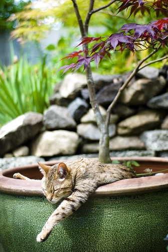 Flower Pot Kitten | by Photo Munki