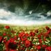 ~ my poppy dream ~ by ~ Pixel Passion ~