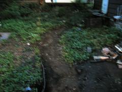 A path!  A path! | by megmcleod