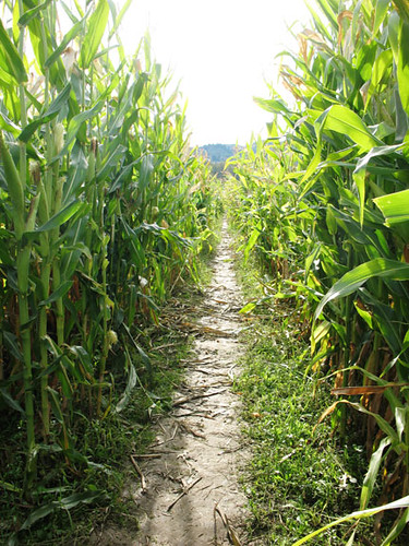 The Art Institute of Portland visits the Kruger's Farm Corn Maze | by Art Institute of Portland