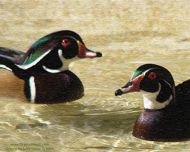 Wood Duck Art