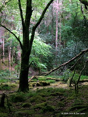 Killarney Forest | by Lyons, Tigers, and Bears...Oh My!