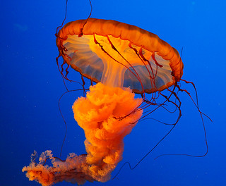 Jellyfish at Ripley's Aquarium in Gatlinburg, TN | Chris ...
