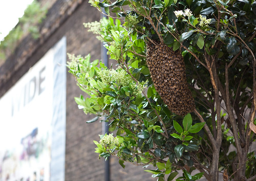 Bee convention in central London | by Lars Plougmann