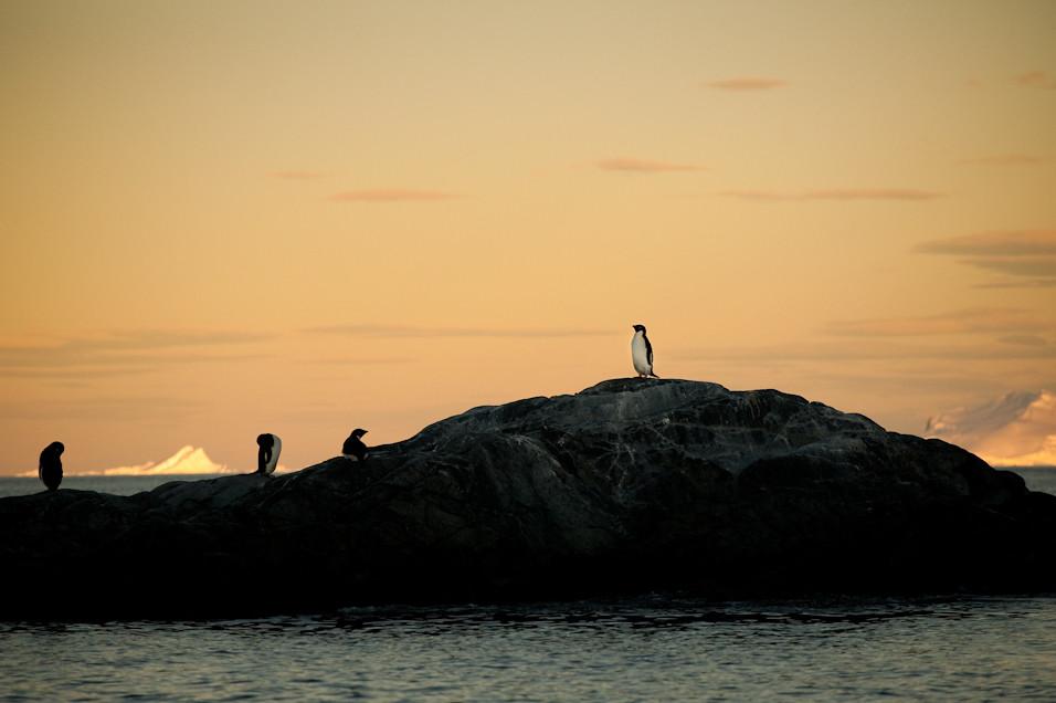 Sunset on Penguino Hill
