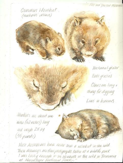 27Jun09 Watercolour workshop Week 5 Assignment - animals