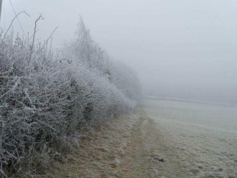 Frosty hedge Wanborough to Godalming