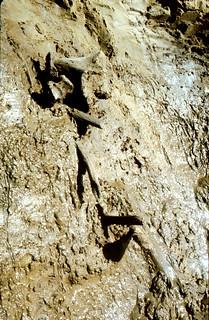 Mammoth bones