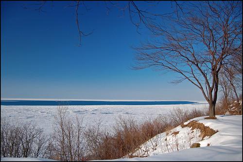 winter lake snow tree ice lakemichigan february
