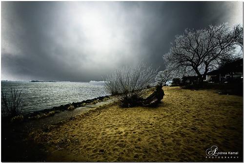trees sky cold beach clouds river sand wind hamburg windy elbe blankenese strandweg aplusphoto —obramaestra—