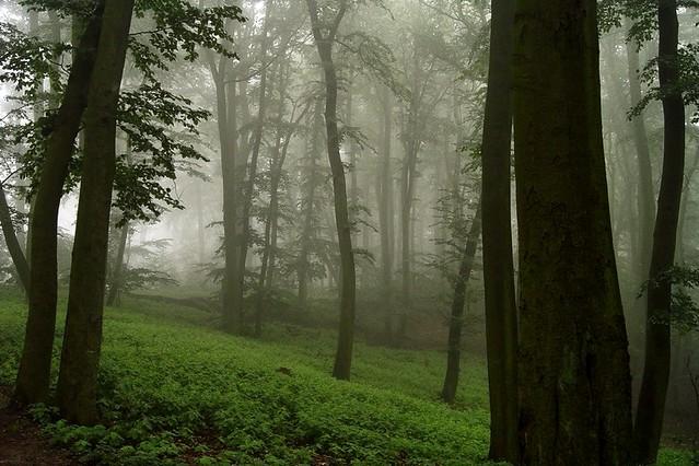 Neverwinter Forest...