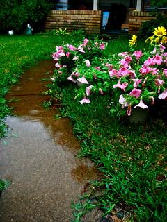 Gardening in the rain | by stephanie b.