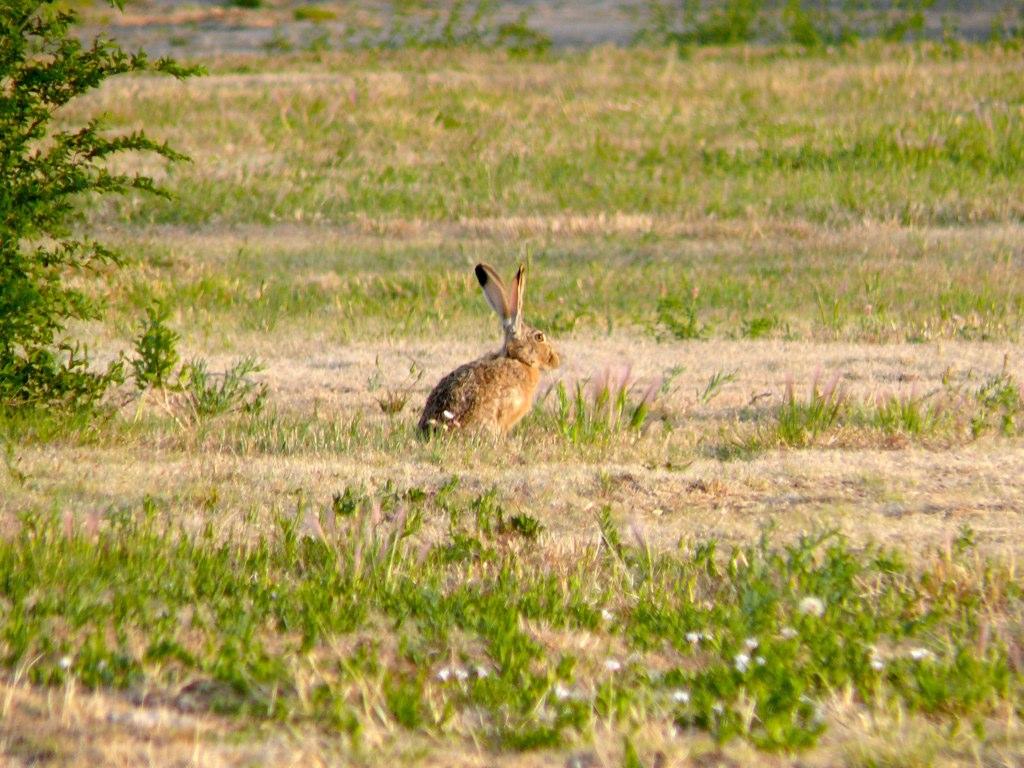Rabbits everywhere!