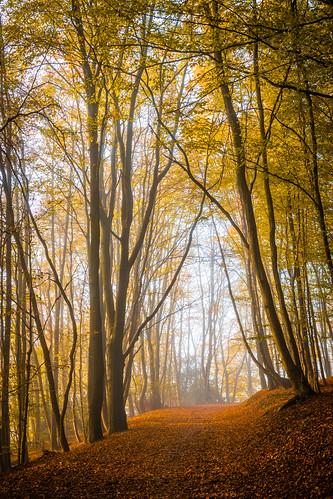 sauerland landscape misty foggy nature schalksmühle nordrheinwestfalen deutschland de autumn fall leaf leafs forest tree trees golden october wood yellow orange canon eos 70d