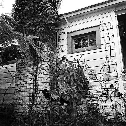 county old trees white house black texture abandoned broken window monochrome canon photography eos spring weeds clayton may wells down bauxite growth porch greenery arkansas usm saline ef 1740mm dilapidated 2010 benton f4l 40d img1946