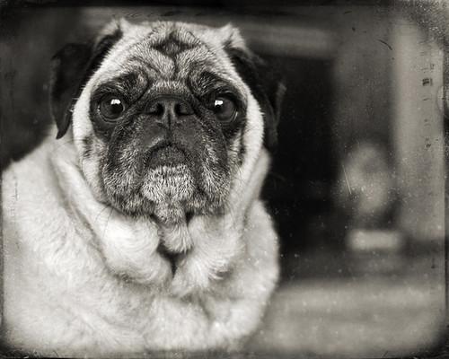 Raya by dog ma