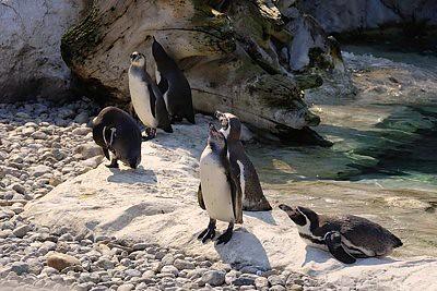 Tiere in Schoenbrunn