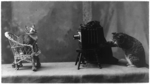 A cat is posed seated on a chair in front of another cat operating a camera.