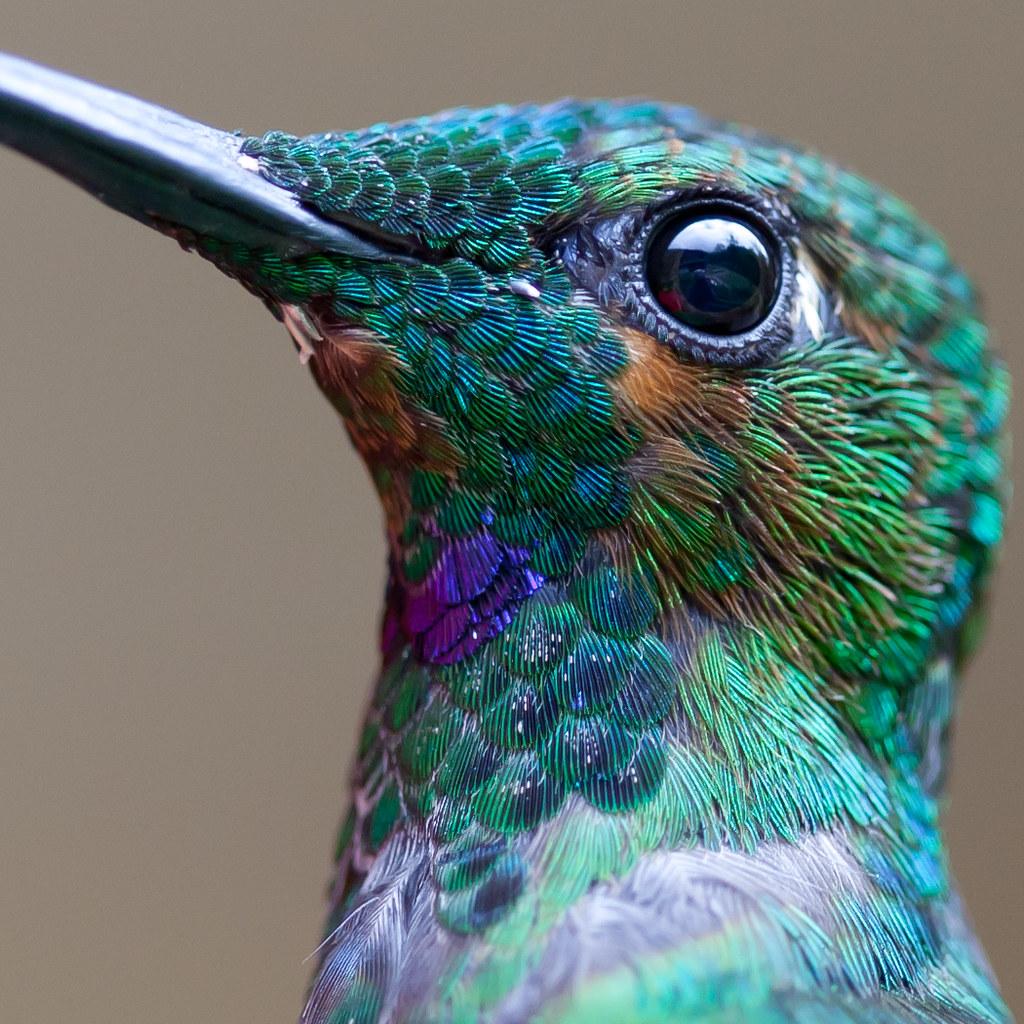 Bird Macro!